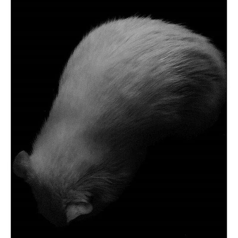 My animal. Rar Instarat Beautiful Monochrome Blackandwhite Vision Art
