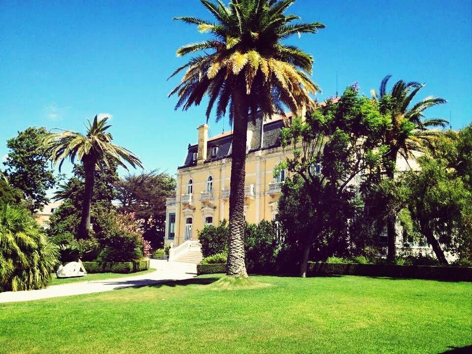 Manor Palmtree Lisboa Yellowmanor