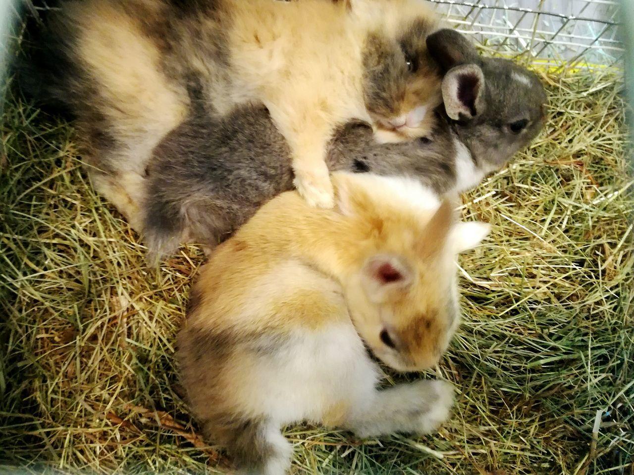 Animal Themes Young Animal Animal Family Togetherness Close-up Rabbit - Animal Domestic Animals Rabbit ❤️ Rabbit 🐇 Colors