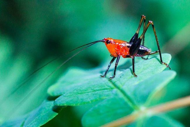 早安 蟲蟲 生態 早起的蟲兒被鳥吃 帶著鏡頭趴趴照 微距 森呼吸 跳