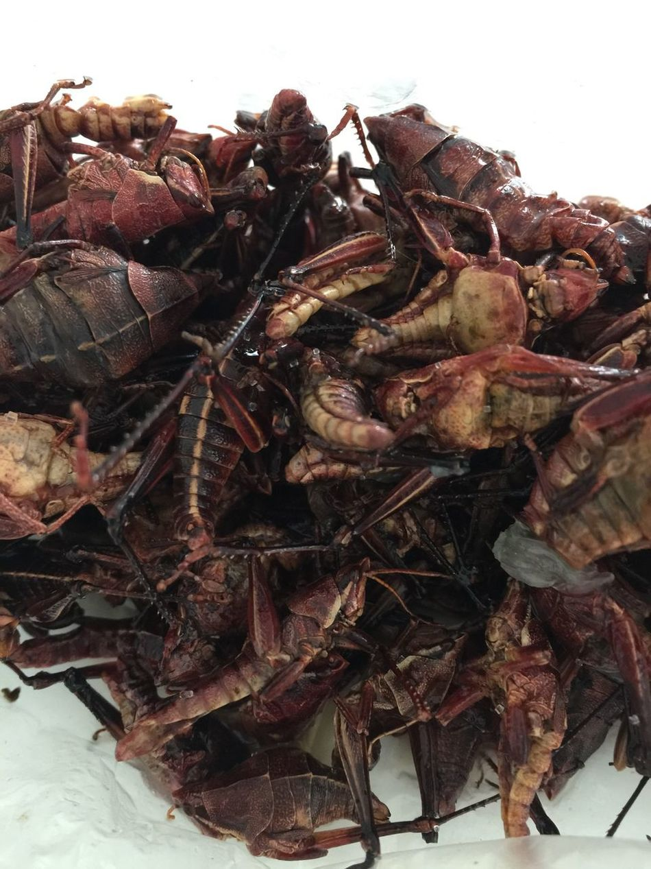 Crickets Food Snack Time! Love Tasty Delicious Mexico
