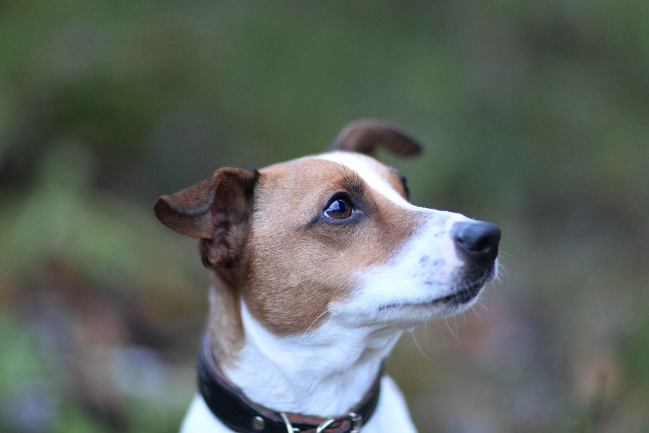 Beautiful stock photos of pets, Achievement, Adventure, Animal, Challenge