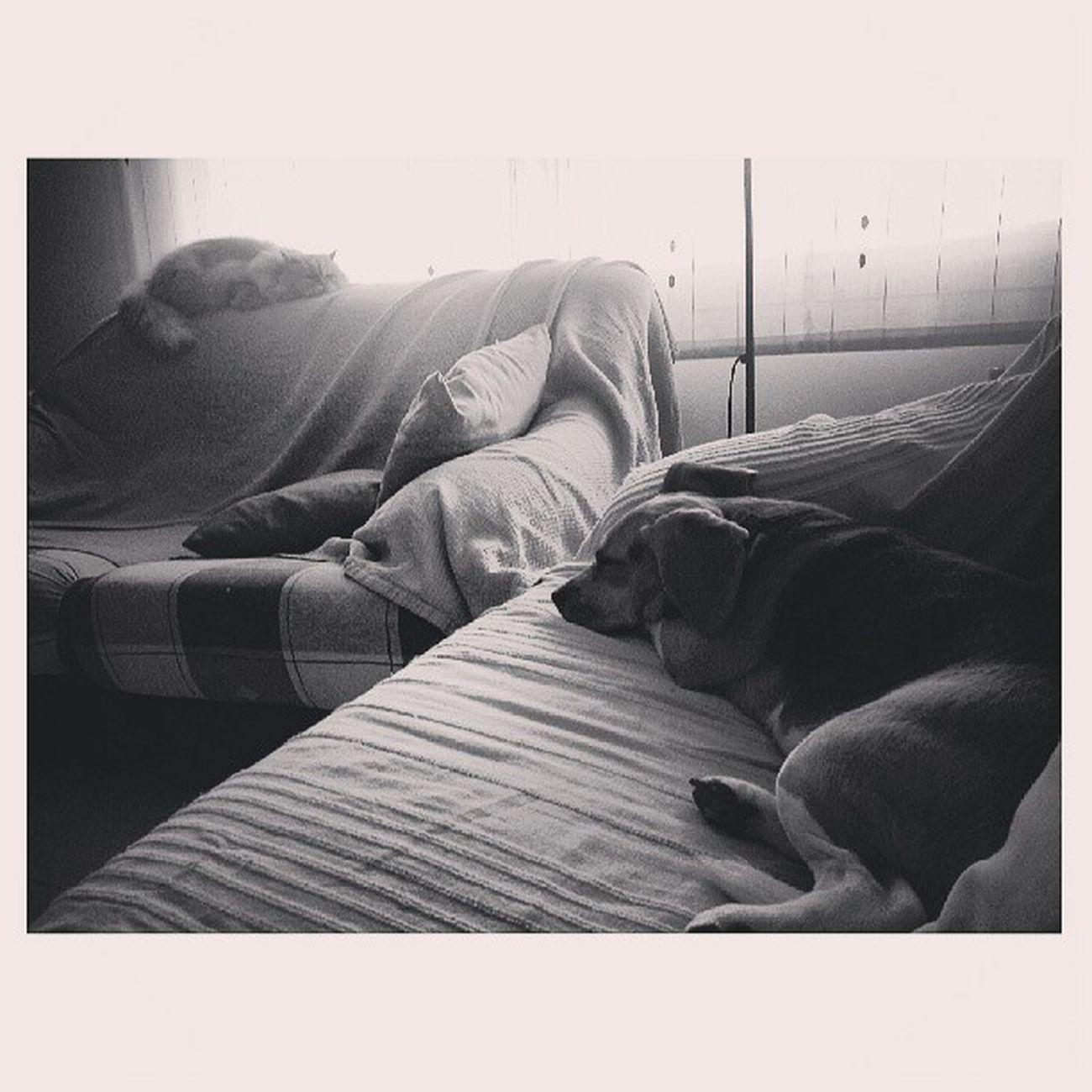 Felices. Instadog Beaglestagram Instapetlovers Catsofinstsgram instacat
