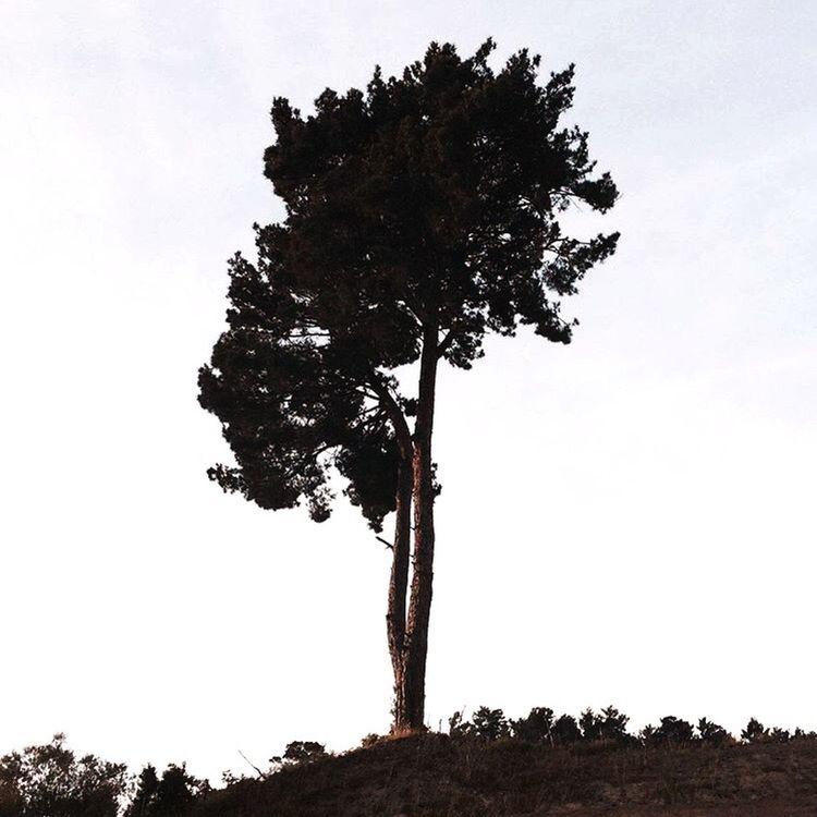 Taking Photos Enjoying Life Relaxing IPhoneography EyeEm Taking Photos Haveagoodtime Goodview Nature Trees Tree🌳