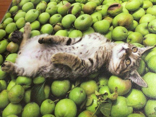 岩合光昭さんの『世界ネコ歩き写真展』で気に入った作品のマウスパッドを購入❤︎ Brown Tabby Cat Cat♡ Cat Lovers Mouse Pad Sendai Mitsukoshi Hello World Look Up Sendai Miyagi