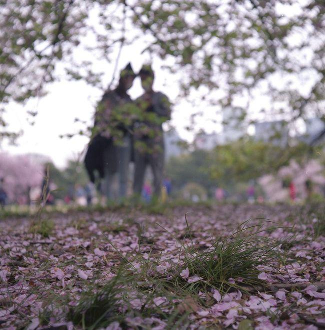 Relaxing Taking Photos Flowers Sakura Film Film Photography Eyeemphotography Relaxing EyeEm Best Shots Tokyo Camera Rolleicord Taking Photos ローライコード 桜