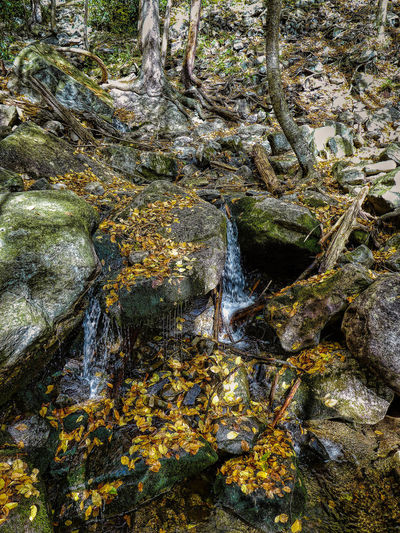 Pennsylvania Lehigh Gorge State Park Check This Out Fall Colors Taking Photos