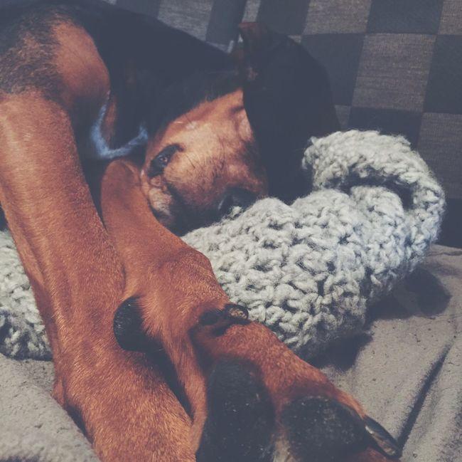 Dog Sleeping Ears Dreaming Good Morning