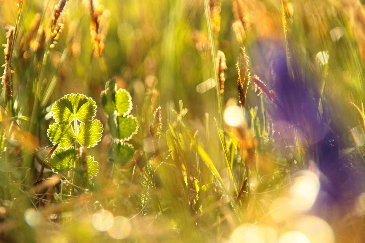 Field lights 💡 Nature Outdoors Grass Beauty In Nature Close-up First Eyeem Photo Day No People