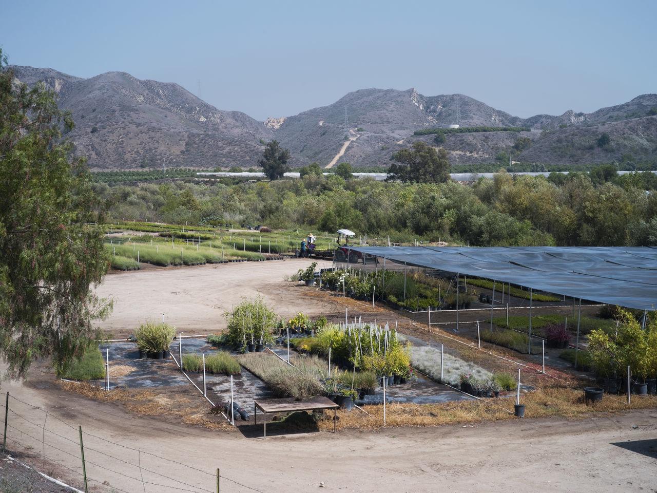 Agriculture California Drought Farm Labour Mexican Mountain Organic Plants