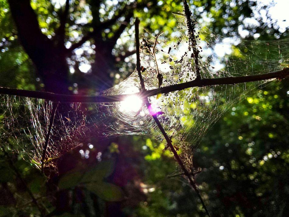 The Place Where The Fairys Play... Sunset Secret Garden Mystery