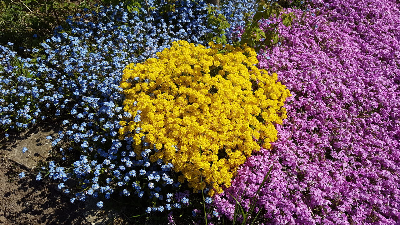 Flower Yellow Purple Blue Beauty In Nature Growth Flower Head Nature Outdoors Backgrounds Fragility No People Freshness Garden Blooming Flower