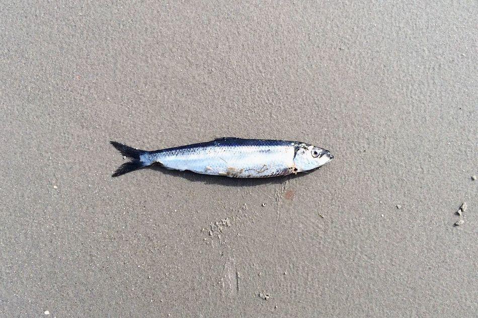 Beautiful stock photos of fish, Animal Themes, Beach, Day, Dead Animal