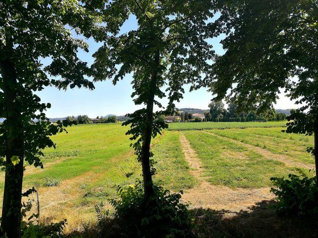 Veneto Green Green Color Italianview Thinking Thinking About You Venetissimo Italy
