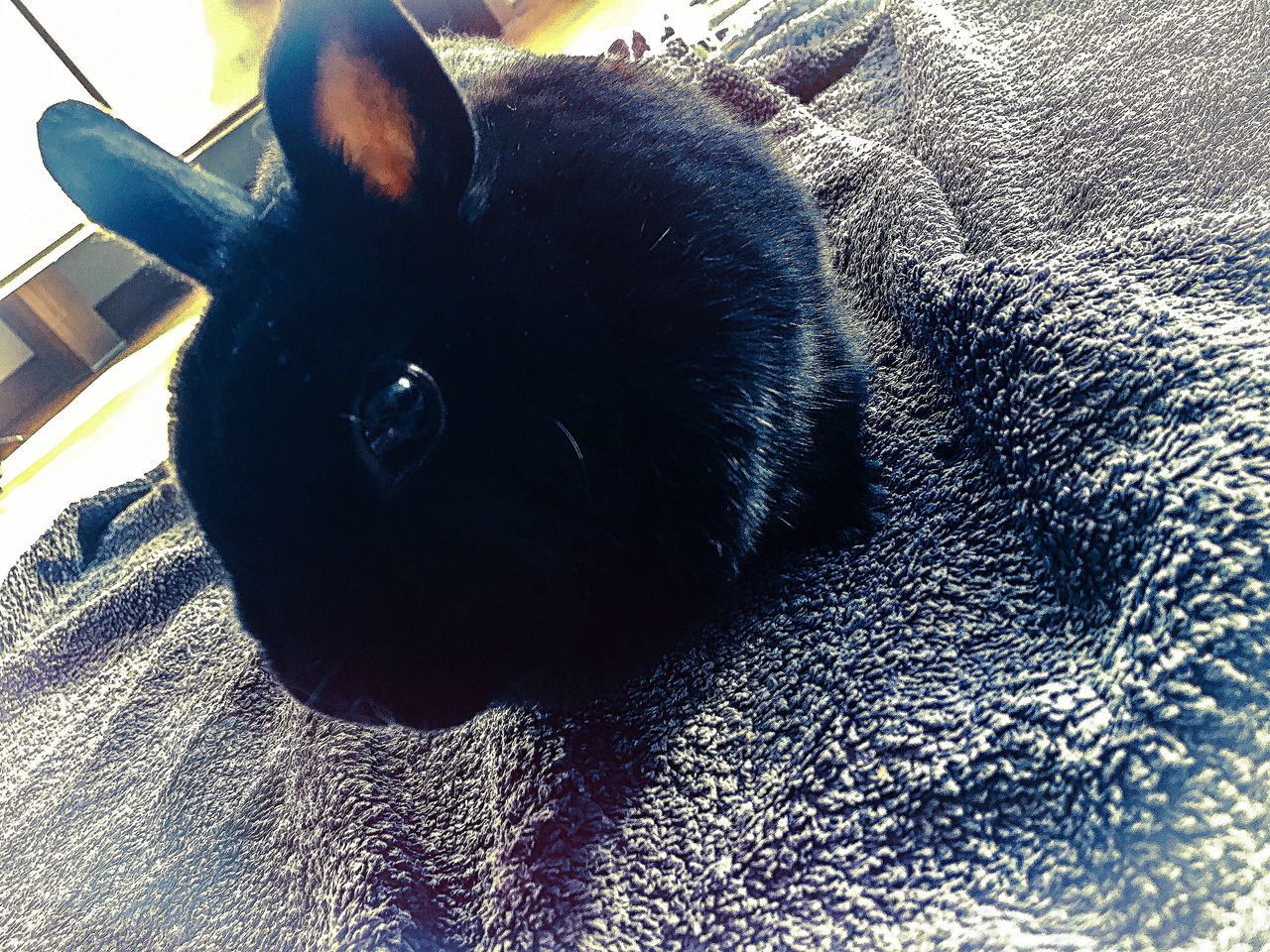 Black Bunny! One Animal Pets Domestic Animals Animal Themes Close-up Rabbit Rabbits IPhoneography Lovephotoeffect BeCreative Beautiful Nature Relaxing Moments Relax