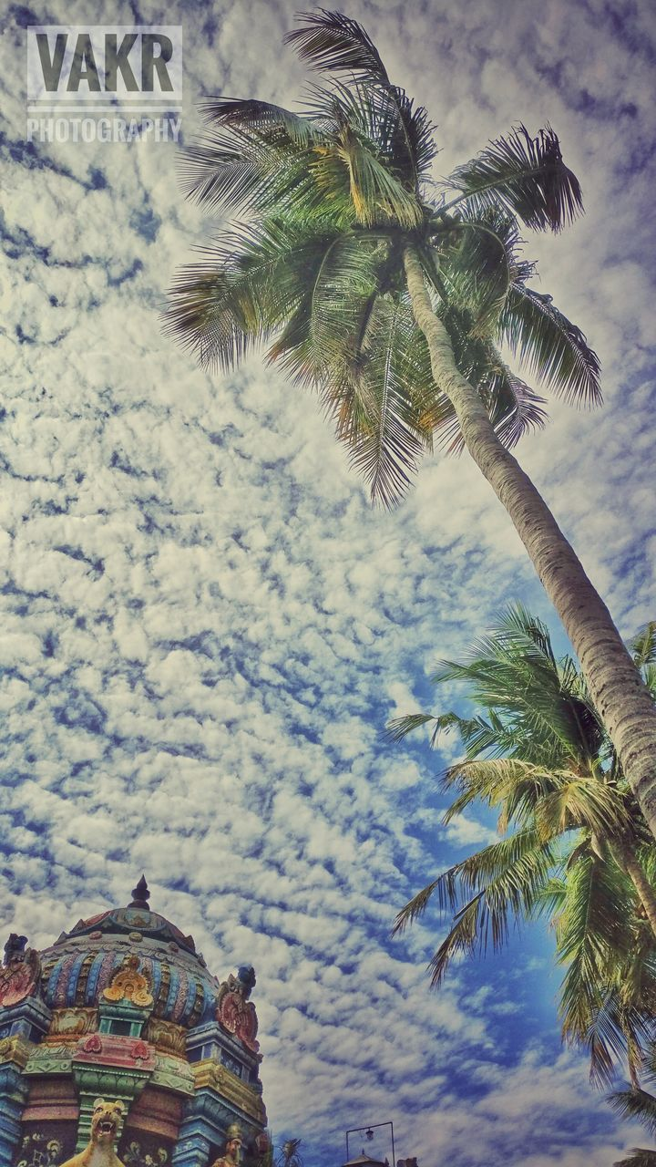 palm tree, low angle view, tree, day, no people, growth, nature, sky, outdoors, scenics, beauty in nature