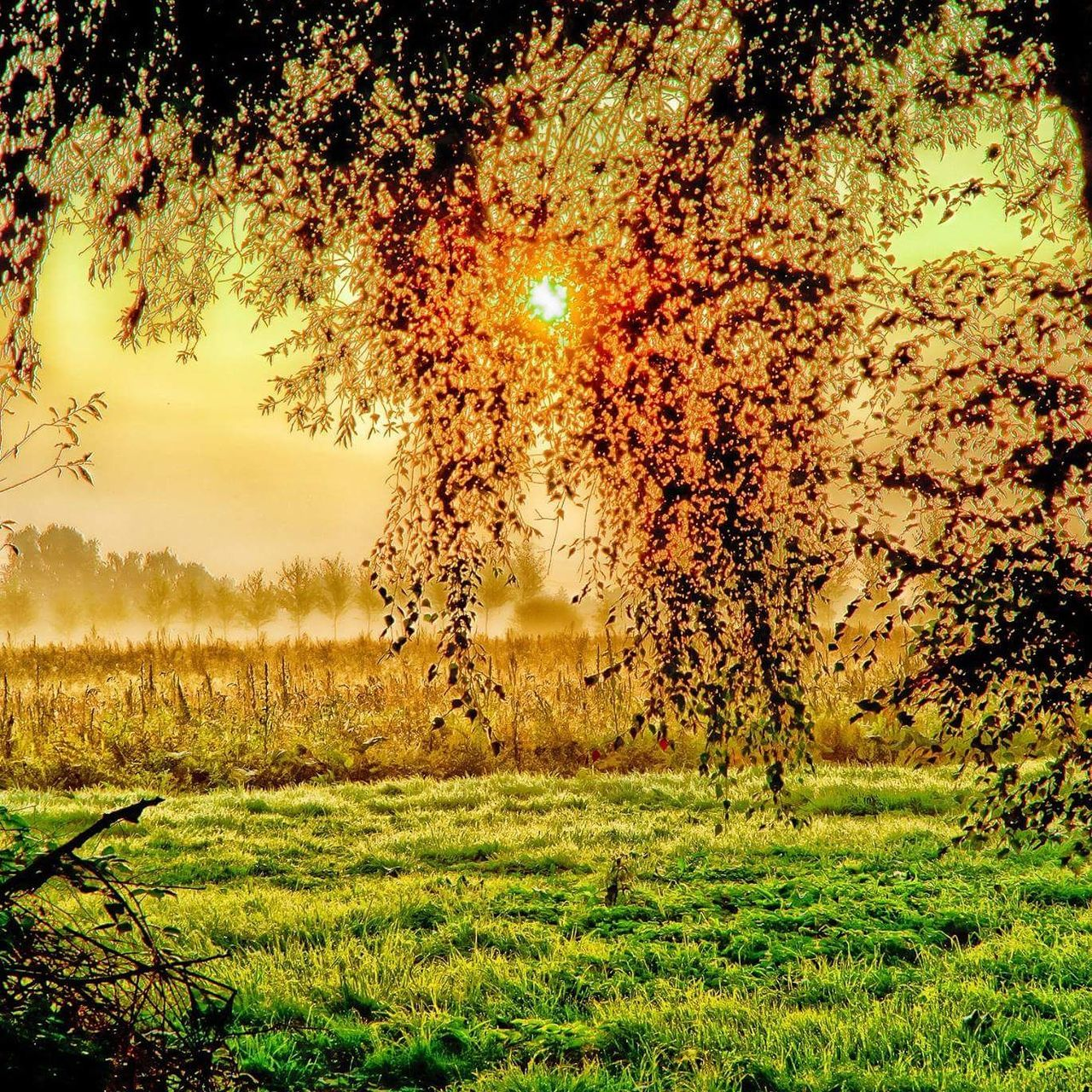 grass, nature, tree, growth, no people, field, beauty in nature, tranquility, outdoors, landscape, sky, day
