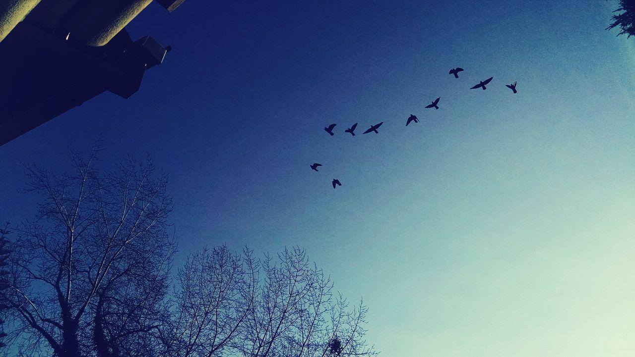 Sancristobal Chile Santiagodechile Birds Céu Pássaros Paisagem Céu Heavenly Sky