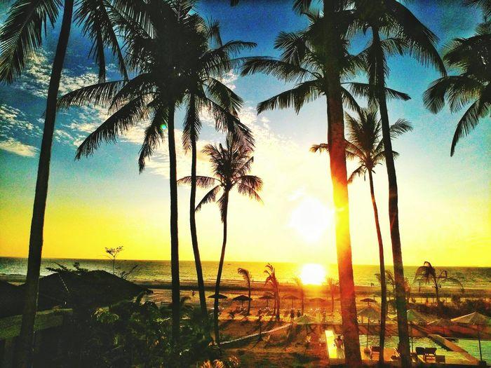 Coconuts Beach Sun Hotellux