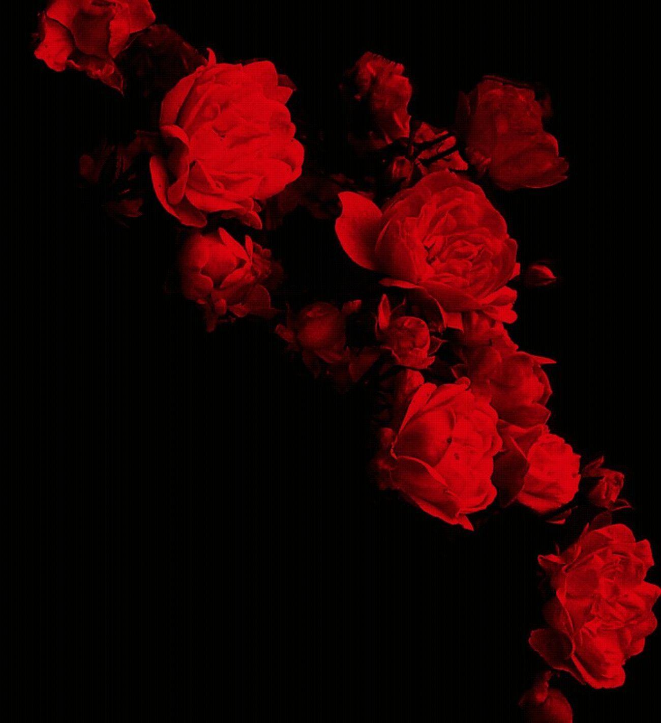 Flower Born Collection Hot Red Let Your Light Shine... Lovelovelove