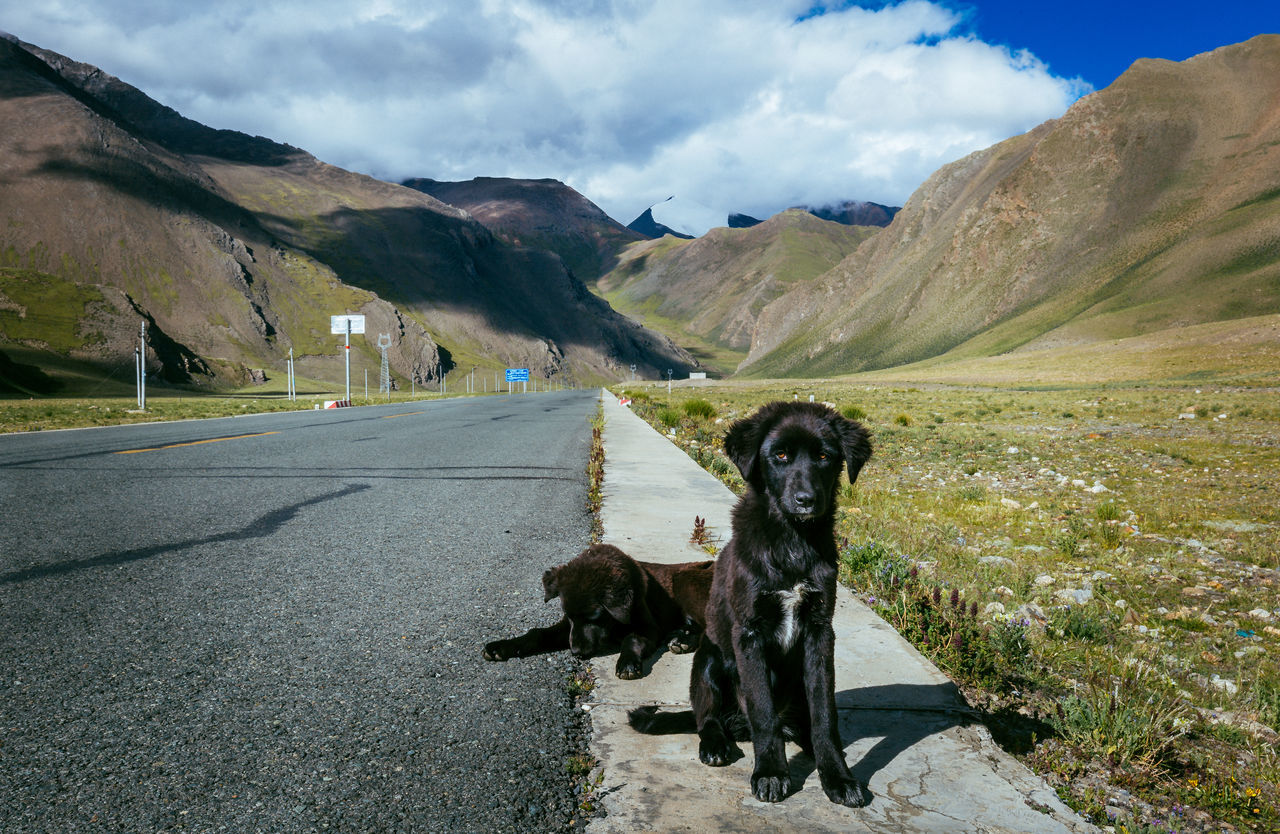 Beautiful stock photos of puppy, Animal Themes, Asphalt, Beauty In Nature, Black Color