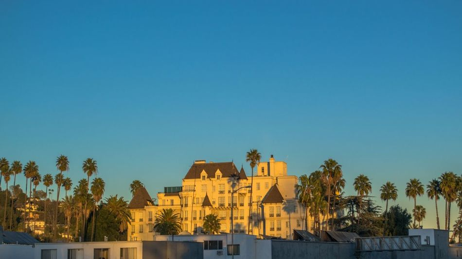 Sunset in Los Angeles California California Love Cat City Friendlylocalguides House Lalaland Landscape Los-angeles MOVIE Palms Sky Sunset USA Visit