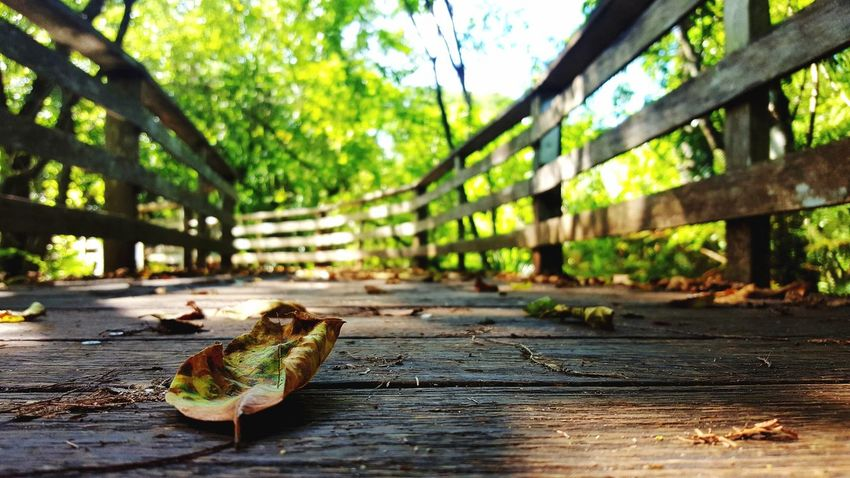 Farewell💙 EyeEm Selects Nature Outdoors No People Day Close-up Leaf Boardwalk Nature Walk Nature Path Corkscrew Sanctuary Swamp Wetlands Cypress Swamp Beauty In Nature Tranquility Low Angle View Leaves Summer Tropical Climate Tranquil Scene Forest Photography Beautiful Fallen Leaves Pine Woodland