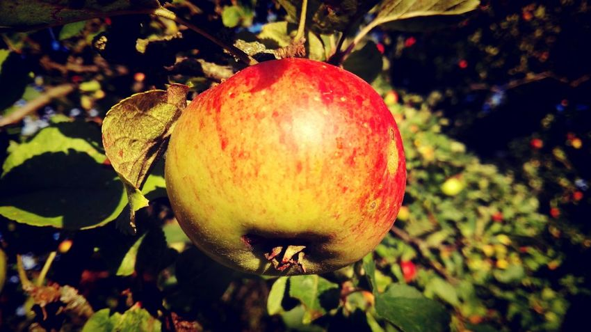 Taking Photos Check This Out Essence Of Summer Apple Appletreegarden Appletree An Apple Keep A Doctor Away. Summer Views Color Palette Altmark How Is The Weather Today? The Places ı've Been Today Summer 2016 Holiday 2016 August2016 Showcase August Summertime