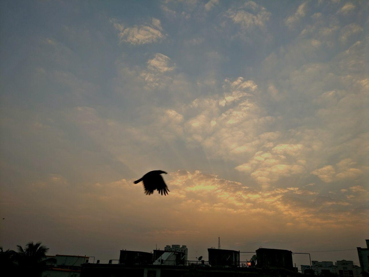 Flying Bird Horizontal Outdoors Spread Wings Airplane Sky Day Dusky Sky sunset #sun #clouds #skylovers #sky #nature #beautifulinnature #naturalbeauty photography landscape EyeEm Birds