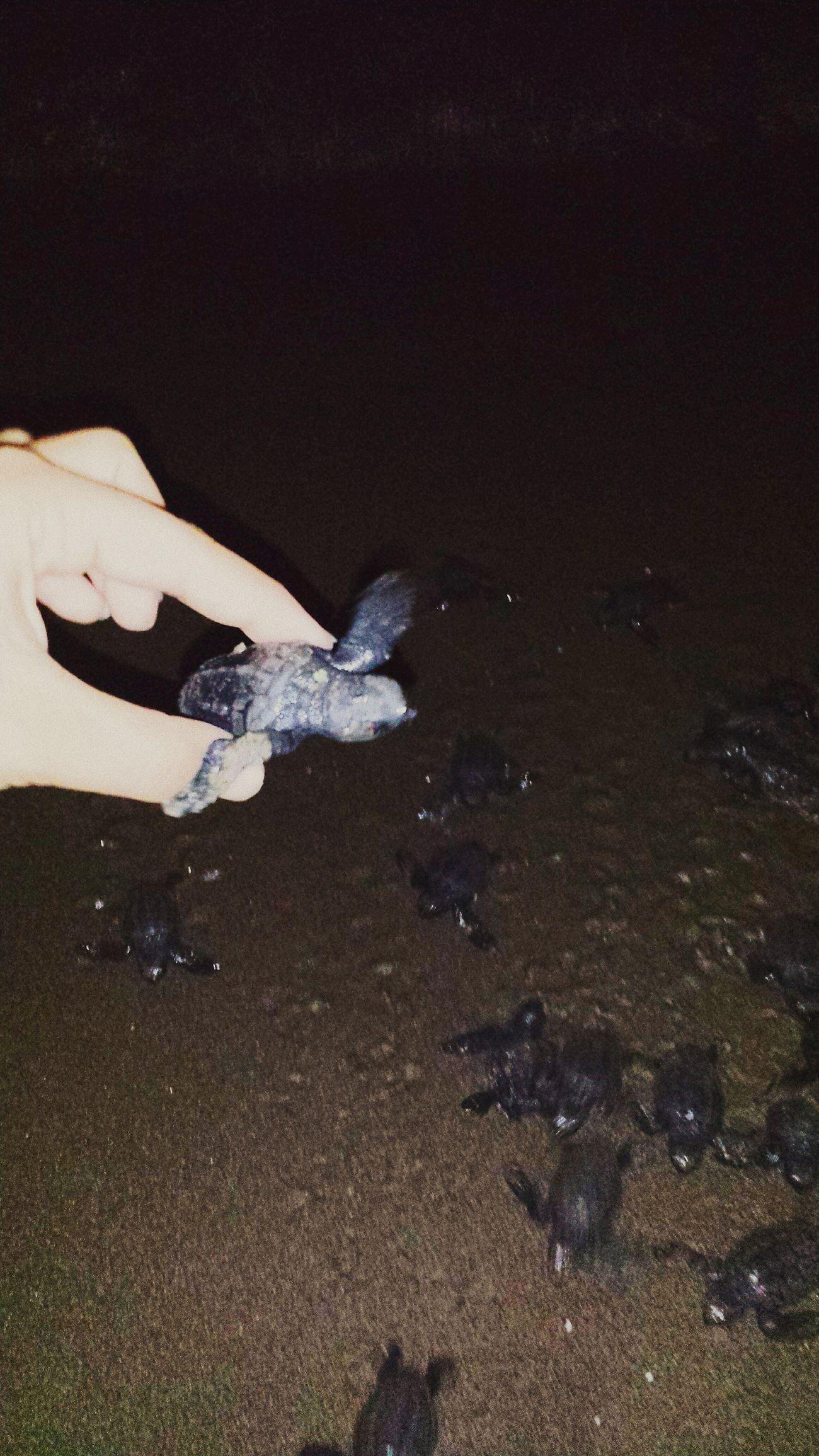Tömük Sahil Sea Carettacaretta Caretta Caretta Beach Kurtarma Yavrucaklar Mersin Tömük First Eyeem Photo Türkiye