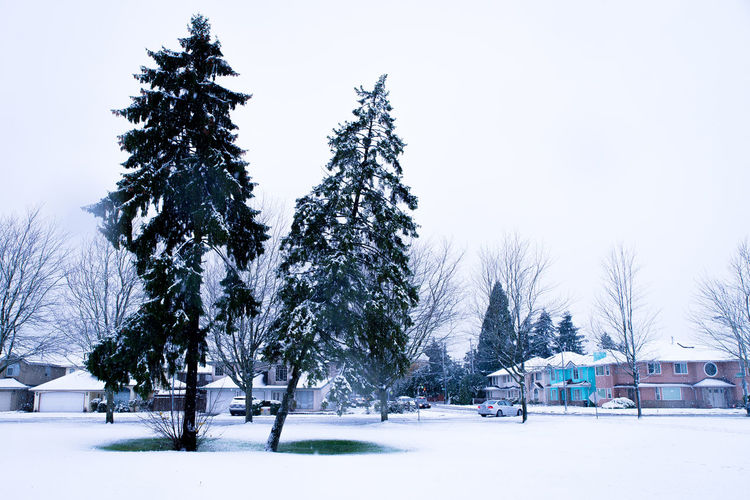 A chilly winter in Vancouver. Bc Beautiful Canada Christman Cold Temperature D610 Landscape Nature Nikon Outdoors Sky Snow Snow ❄ Snowing Tree Vancouver White Winter Winter First Eyeem Photo
