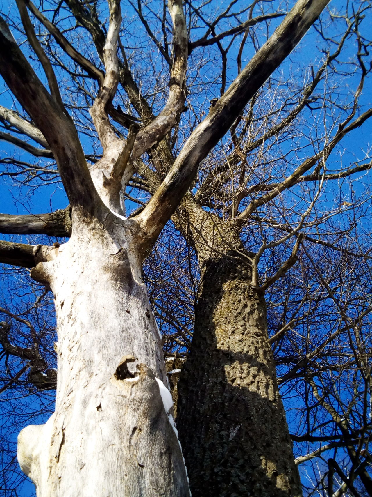Tree Low Angle View Tree Trunk Day No People Branch Nature Sky Outdoors Bare Tree Close-up Growth Frozen Sunlight Landscape The Great Outdoors - 2016 EyeEm Awards Nature_collection EyeEm Nature Lover Blue Clear Sky Weather Animal Themes Tranquility Beauty In Nature Silhouette