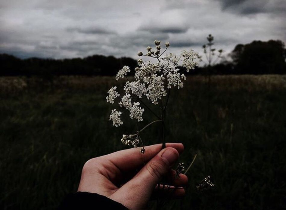 Wallflower🌻 Freshness Fragility Person Holding Growth Focus On Foreground Tree Bunch Of Flowers Botany Field Close-up Tranquility Personal Perspective Twig Plant Springtime Flower Beauty In Nature Nature In Bloom Outdoors Beautiful Meanigful Deep