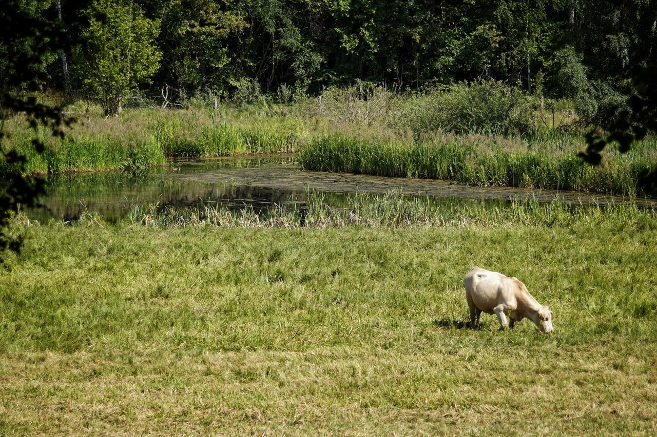 Huddinge Showcase July 2017 Sweden 2017 Juli Niklas EyeEm Selects Grass Animal Themes Field Domestic Animals High Angle View Landscape Mammal Outdoors Nature One Animal Green Color