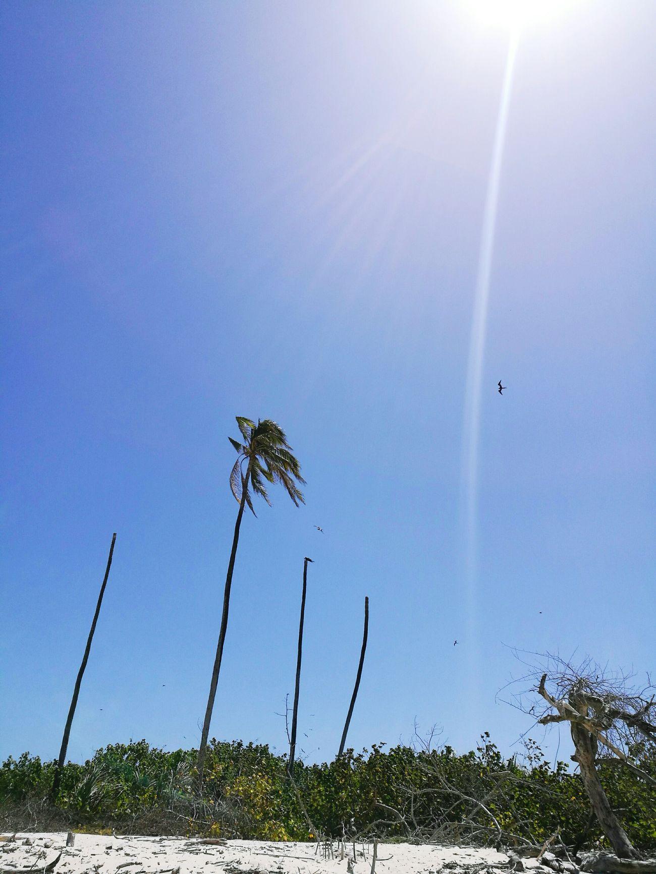 Verano Panama City Beach Nature_collection