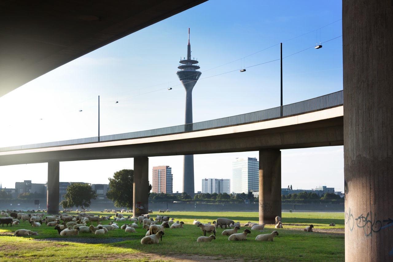Beautiful stock photos of schaf, Animal Themes, Architecture, Below, Bridge - Man Made Structure