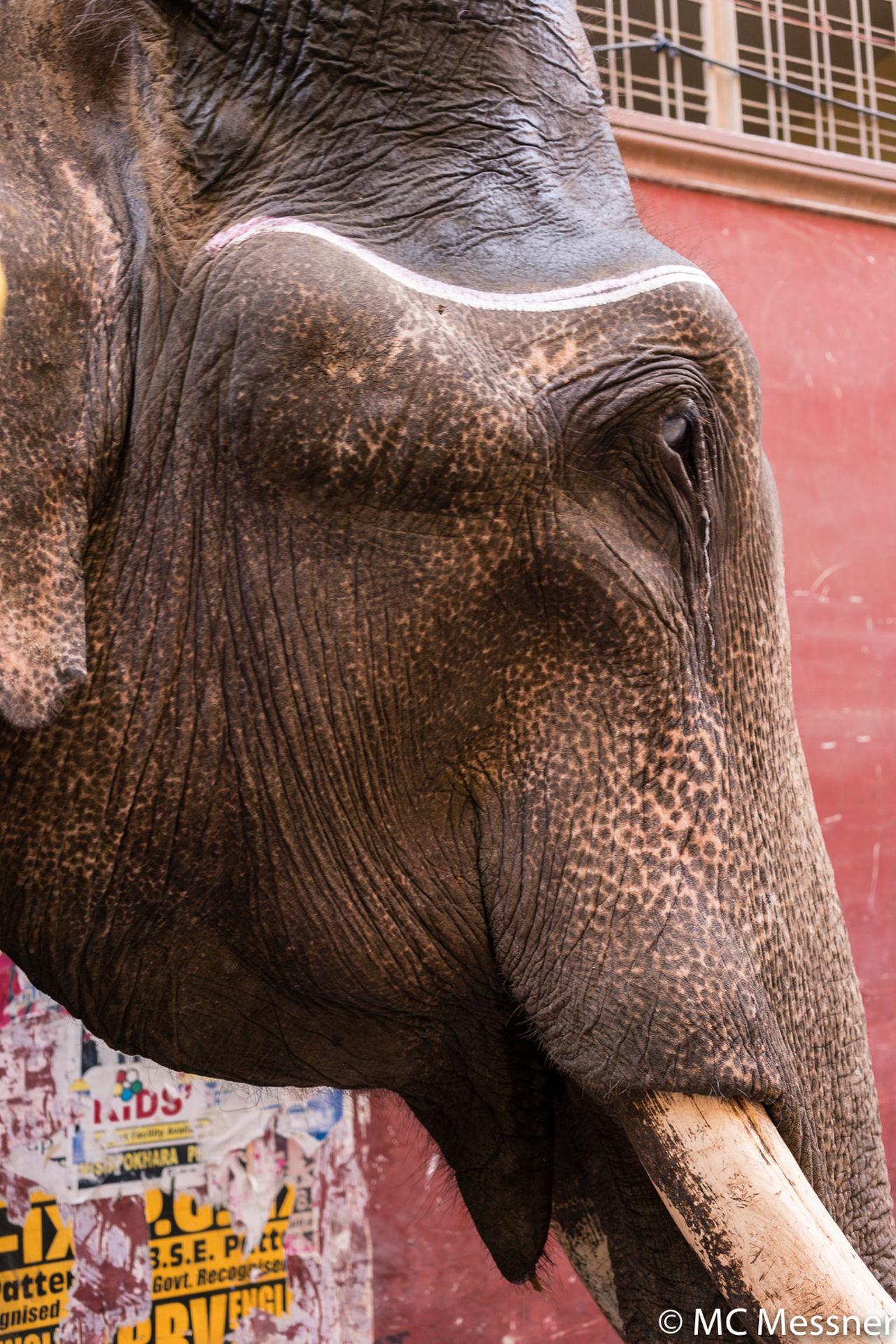 Animal Asian Elephant Close-up Elephant Everyday Life India Indian Elephant Indiapictures No People Street Photography Streetphotography Travel Travel Photography Varanasi Varanasi Ganges Varanasi India
