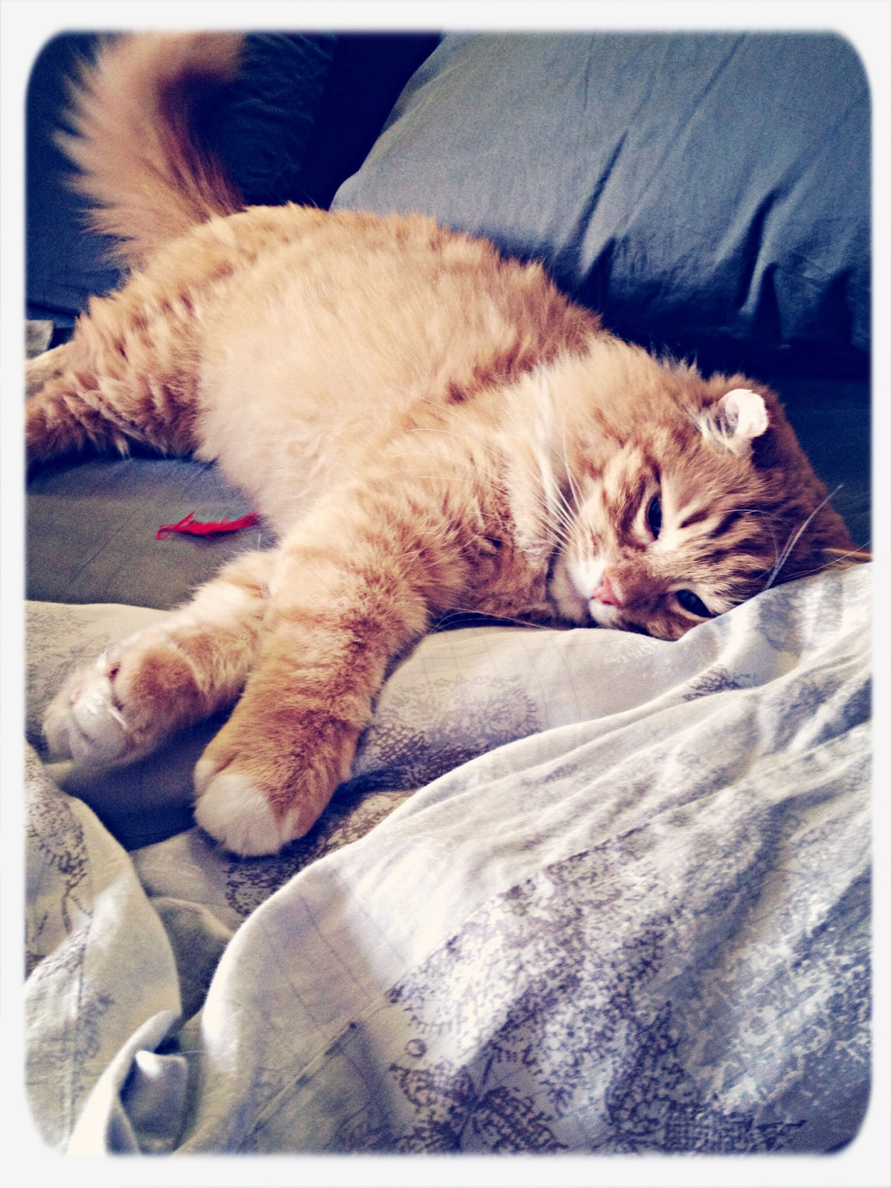 animal themes, transfer print, domestic animals, pets, one animal, mammal, domestic cat, auto post production filter, indoors, sleeping, cat, relaxation, feline, resting, close-up, person, togetherness, part of
