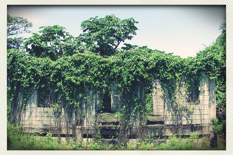 abondoned house in jamaica