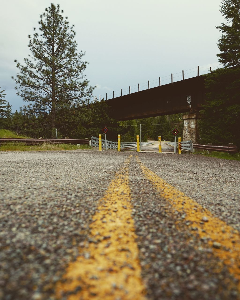 asphalt, yellow, road, no people, the way forward, tree, autumn, day, outdoors, nature