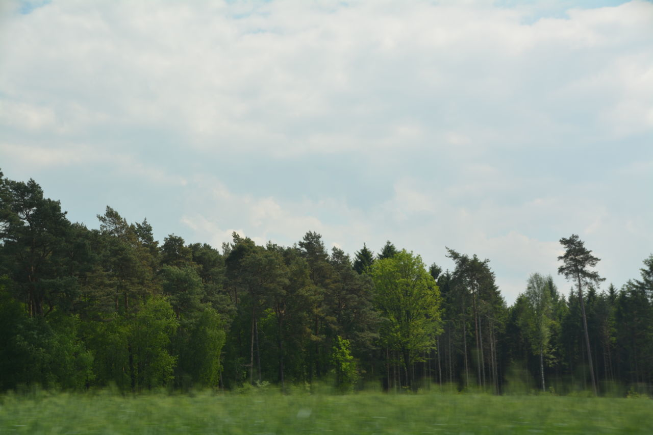 tree, nature, tranquility, no people, growth, beauty in nature, tranquil scene, sky, landscape, scenics, forest, outdoors, day, grass, scenery