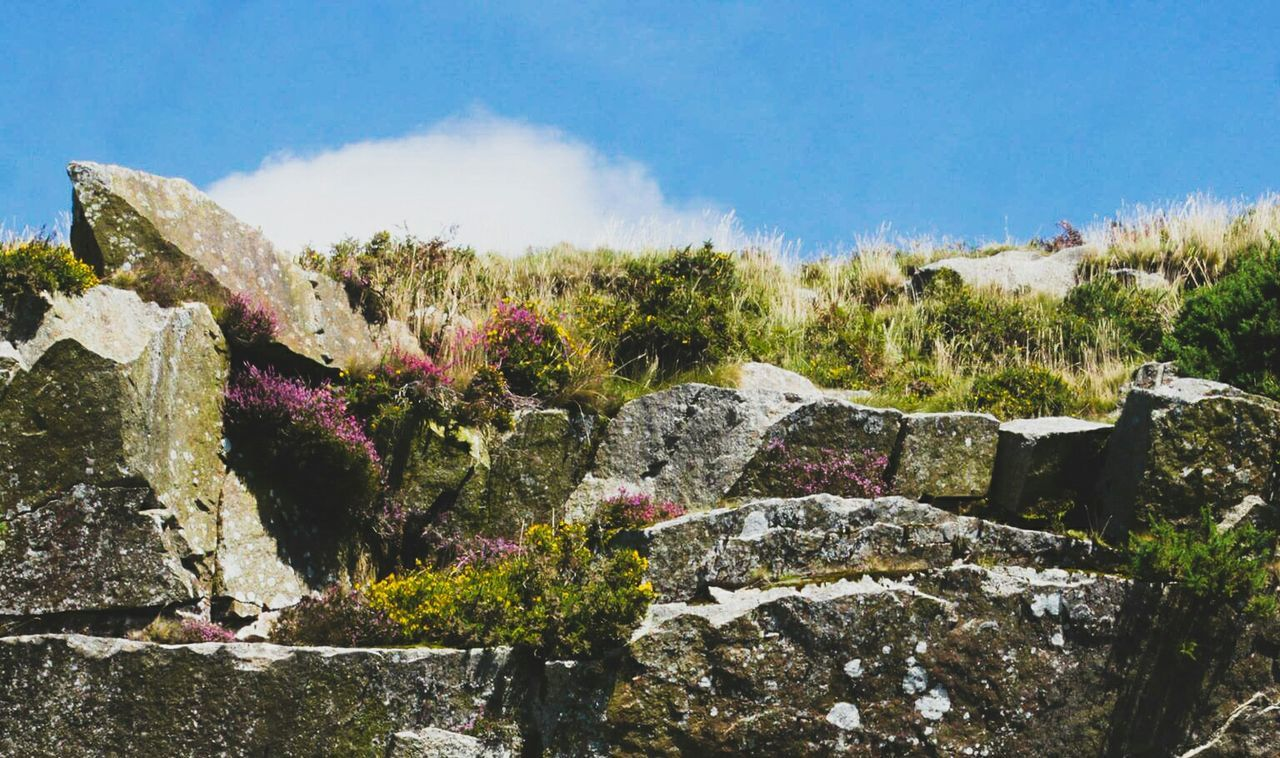 Bright summer days ☺ Countryside Moorland Granite Rock Landscape For My Friends That Connect AMPt_community Cornwall EyeEm Nature Lover No People Cornwall Uk Beauty In Nature Quarry Scenic Beauty In Everything Summertime Colour Of Life