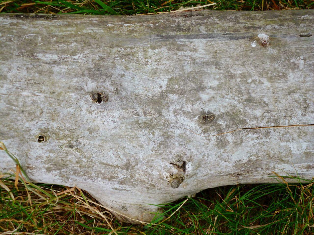 'Strip' Logs Wood Woods Tree Hampstead Heath Nature Grass -- B