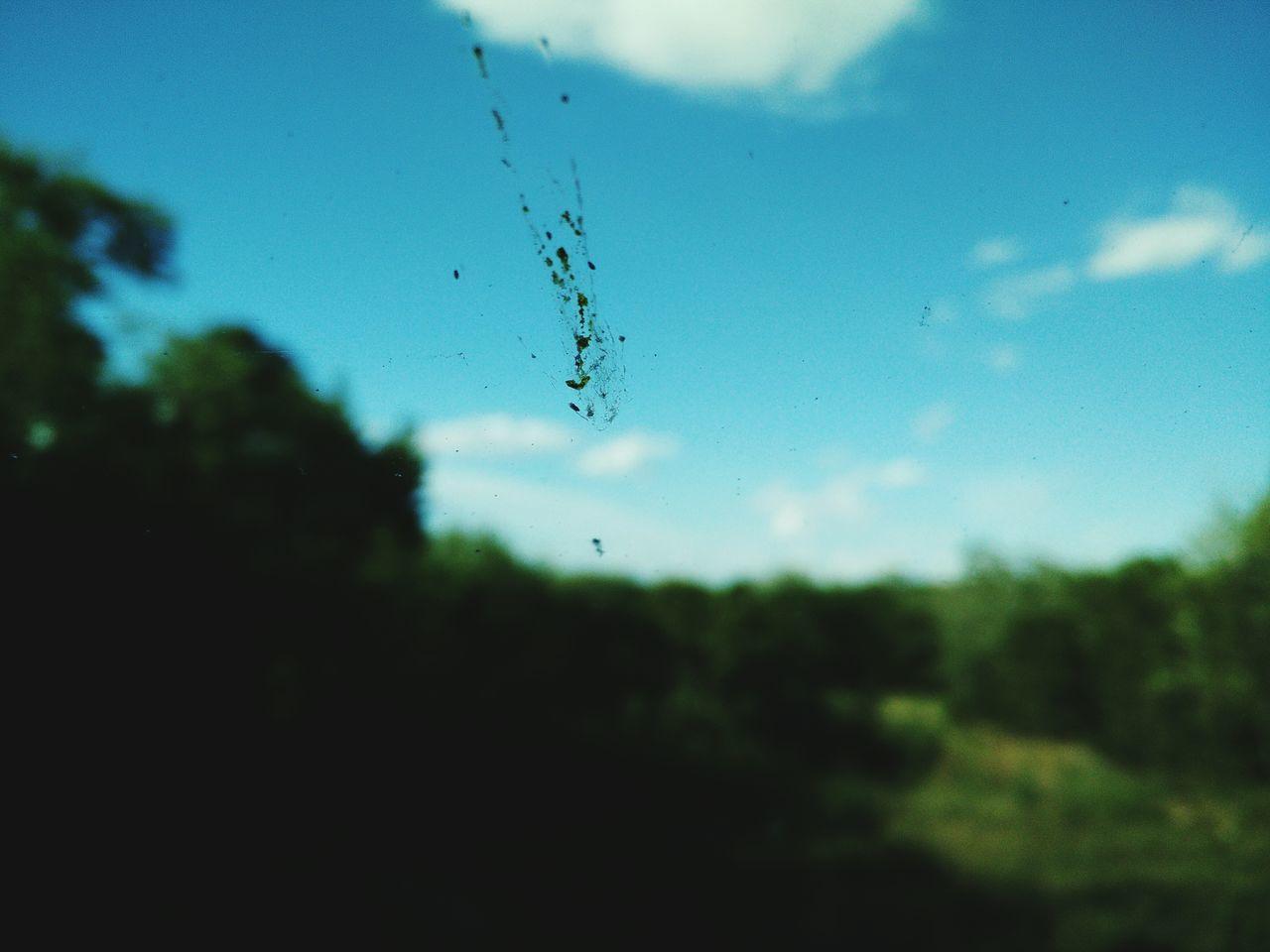 Splat Bug Bug On Windhield Macro Photography Mobilephotography Oneplus One Memories Roadtrip Pastel Power