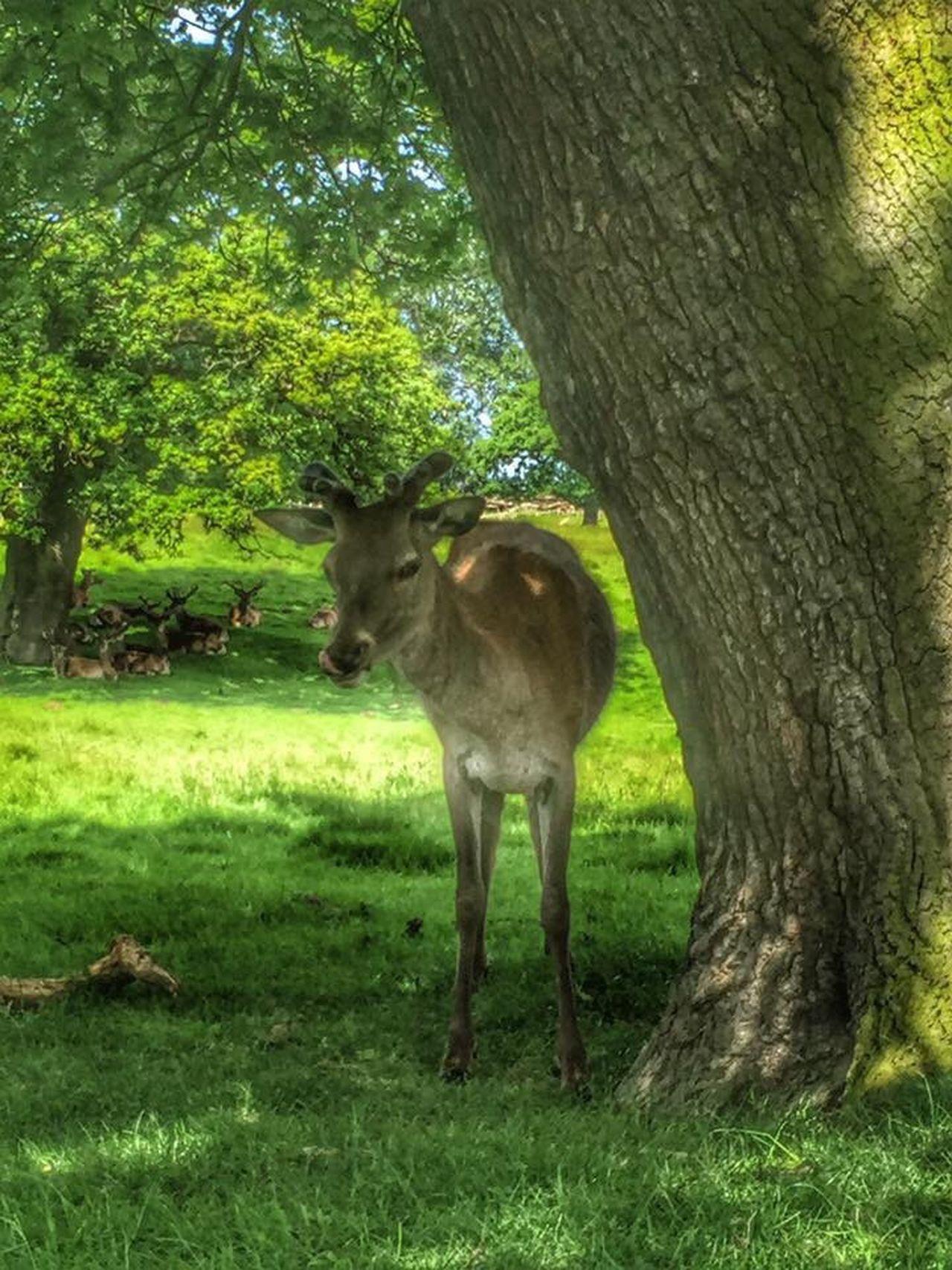 Deer Friendly Animals Nature On Your Doorstep Animals Castle Grounds Nature Landscape Deers Animals Close Up Deer Park