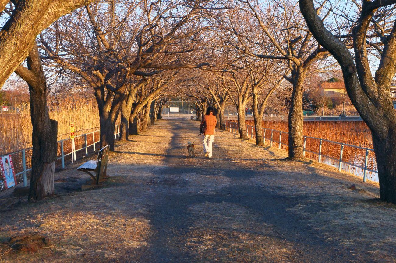 In the winter wind Ñaka Ibaraki Japan Dawn Wind Winter Tree Walk Street