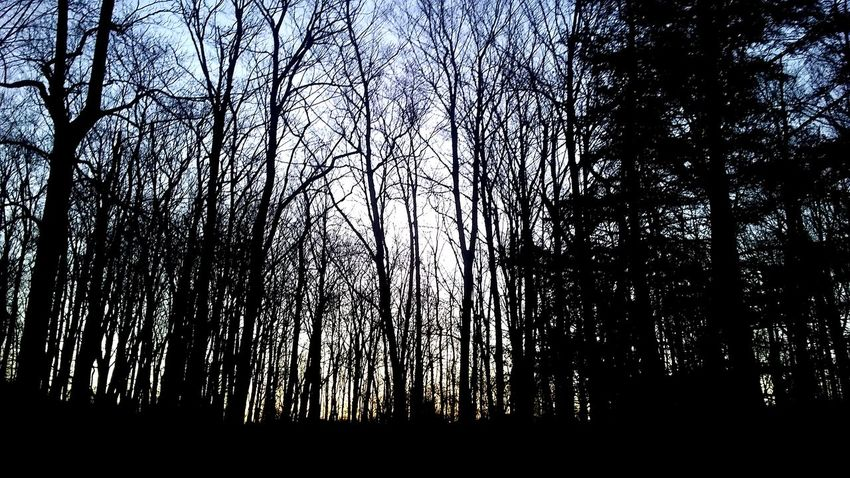 Tree Nature No People Outdoors Sunrise Morning Sky Day Woods