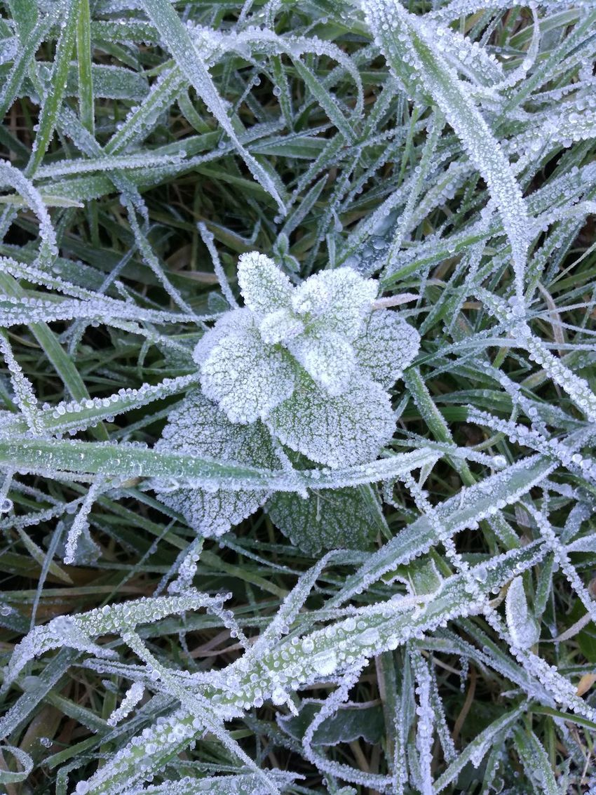 Nature Beauty In Nature Outdoors Cold Temperature Frost Frosty Nature Frosty Mornings Frozen Snow Winter Frosty