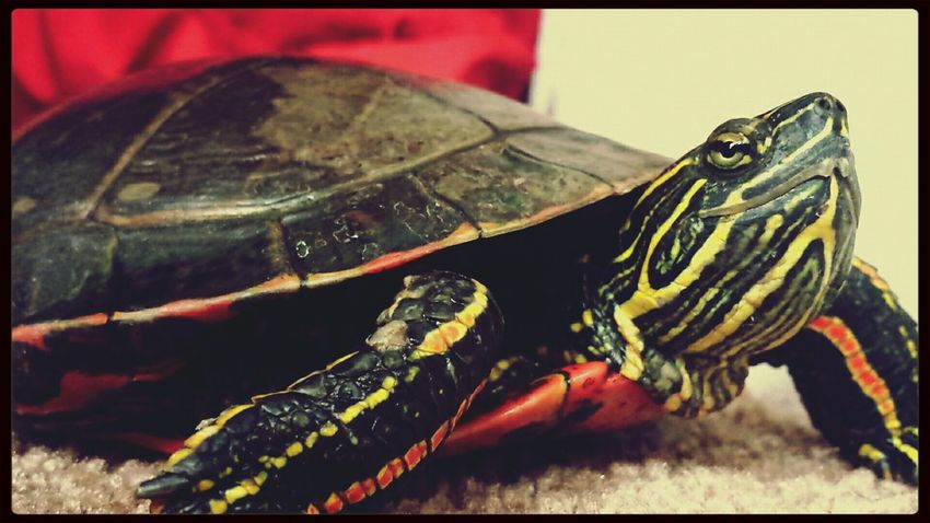 Love my new turtle ?? Turtle Turtle Cuteness