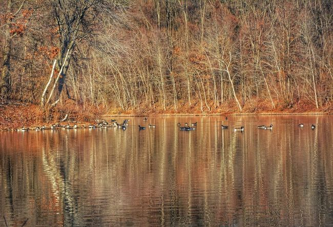 Showcase: December Landscape_Collection Birds Water Reflections River Trees HDR Nature